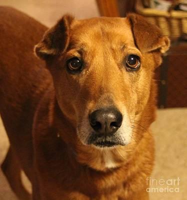 Dog Photograph - Sugar by Cathy Lindsey