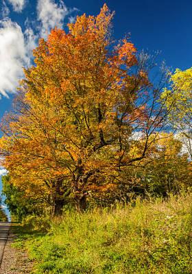 Split Rail Fence Photograph - Sugar Maple 3 by Steve Harrington