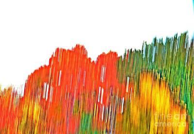 Photograph - Sugar Maple Abstract by Randy J Heath