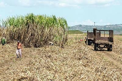 Sugar Plantation Workers Art Print