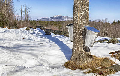 Sugaring Season Photograph - Sugar Season by Carol Menard