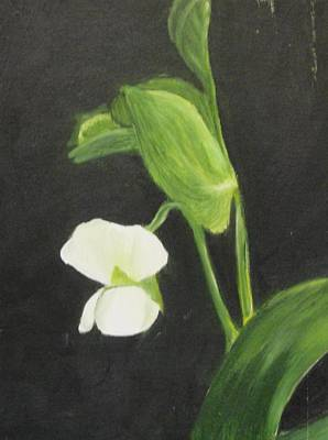 White Blossoms Painting - Sugar Snap Blossom by Maureen Hargrove