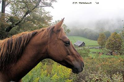 Photograph - Sugar Watching Over Her Home by Carolyn Postelwait