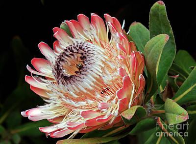 Photograph - Sugarbush And Bees by Kate Brown