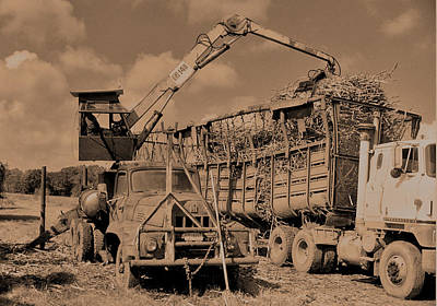 Photograph - Sugarcane Being Loaded In Truck by Ronald Olivier