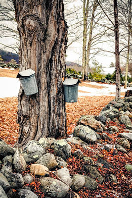 Maple Syrup Photograph - Sugaring by Robert Clifford