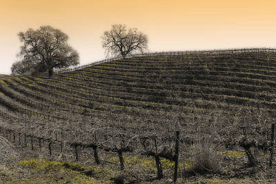 Suisun Valley Vinyards Art Print