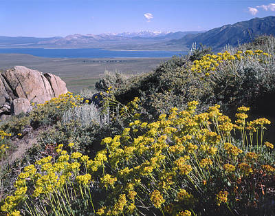 Photograph - 4m6337-sulphur Flower And Mono Lake by Ed  Cooper Photography