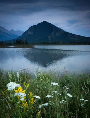 Nature Conservation Photograph - Sulphur Mountain And Wildflowers by Cale Best