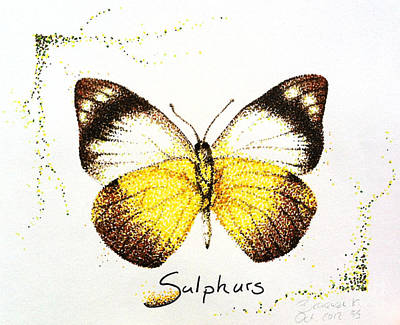 Drawing - Sulphurs - Butterfly by Katharina Filus