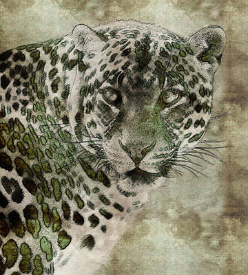 The Tiger Painting - Sultan Of The Jungle - Cheetah by Celestial Images