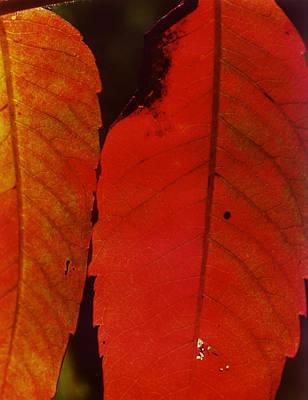 Sumac Leaves.jpg Art Print