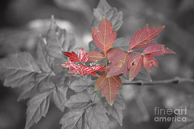 Photograph - Sumac by Terri Mills