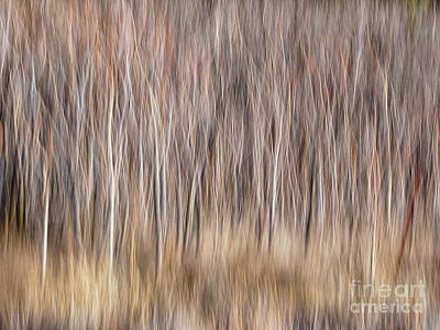 Photograph - Sumac Trees In Winter by Marianne Jensen