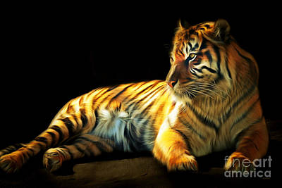 Kitty Digital Art - Sumatran Tiger 20150210brun by Wingsdomain Art and Photography