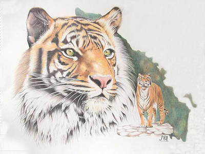 Endangered Drawing - Sumatran Tiger by Jill Parry