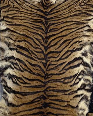 Sumatran Tiger Skin Art Print