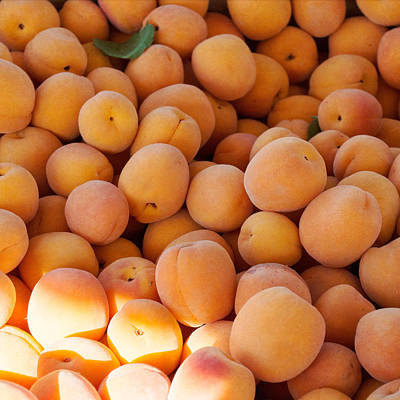 Photograph - Summer Apricots by Cathie Richardson