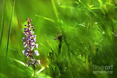 Photograph - Summer At Grass Roots Level by Kennerth and Birgitta Kullman