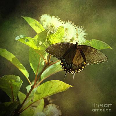 Latidude Image - Summer Awakening by Anita Miller