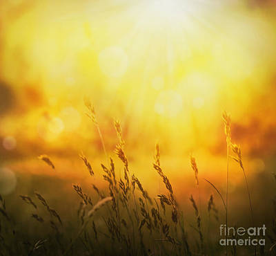 Npetolas Photograph - Summer Background by Mythja  Photography