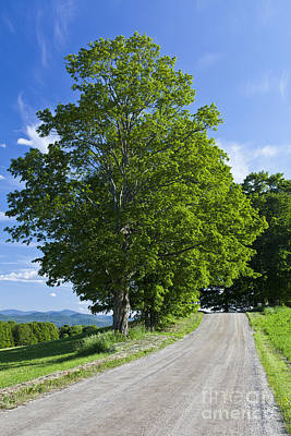 Photograph - Summer Backroad by Alan L Graham