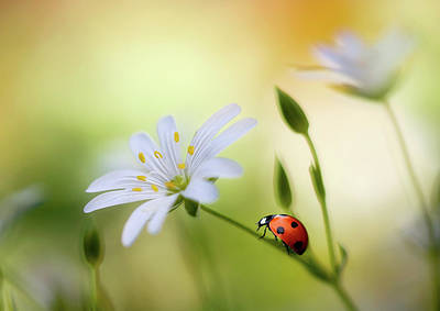 Ladybug Photograph - Summer Beauties by Mandy Disher