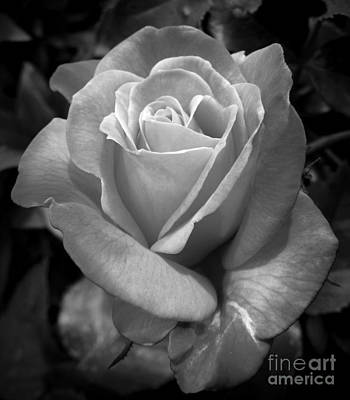 Photograph - Summer Beauty Monochrome by Chalet Roome-Rigdon