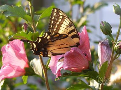 Photograph - Summer Butterfly by LeLa Becker