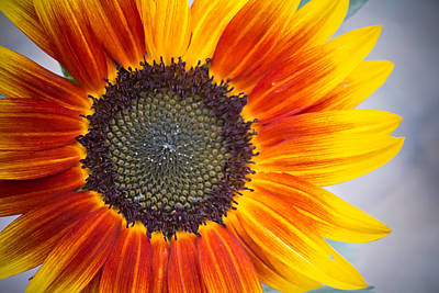 Summer Cheer - Sunflower - Casper Wyoming Original