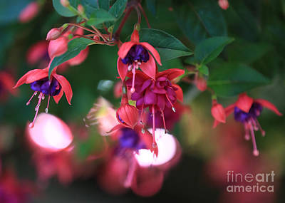 Photograph - Summer Color by Carol Groenen