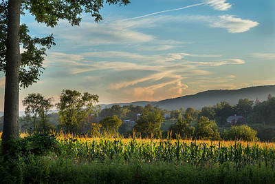 New England Dairy Farms Photograph - Summer Corn by Bill Wakeley