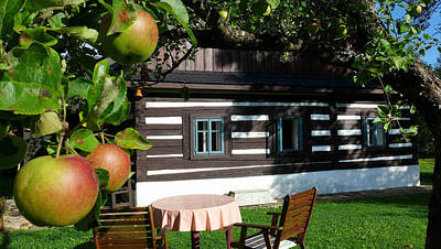 Summer Cottage House With The Apple Tree Czech Moravian Highland Original by Walter Novak