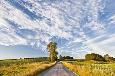Photograph - Summer Country Road by Alan L Graham