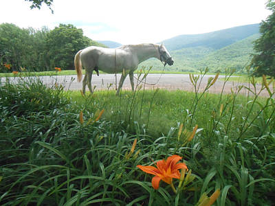 Paso Fino Photograph - Summer Day Memories With The Paso Fino Stallion by Patricia Keller