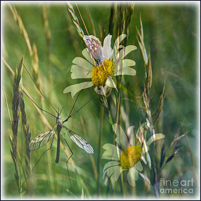 Photograph - Summer Days by Liz  Alderdice