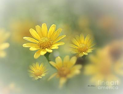 Nickel Yellow Photograph - Summer Dream by Yumi Johnson