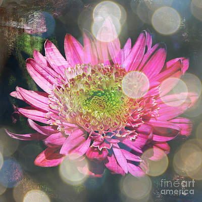 Digital Touch Photograph - Summer Dreaming by Carol Groenen