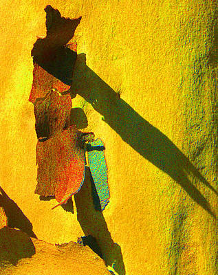 Photograph - Summer Eucalypt Abstract 17 by Margaret Saheed