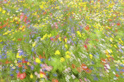 Impressionistic Photograph - Summer Field Flowers.......... by Piet Haaksma