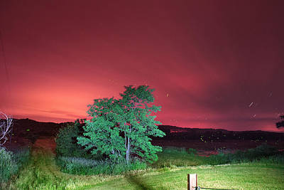 Photograph - Summer Fireflies by Mary Almond