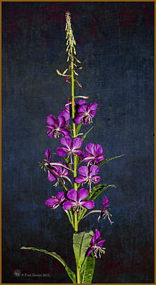 Summer Fireweed Art Print
