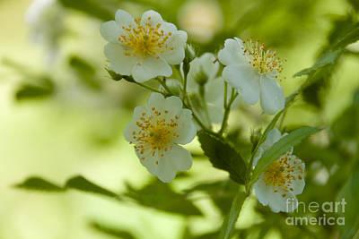 Photograph - Summer Flower by William Norton