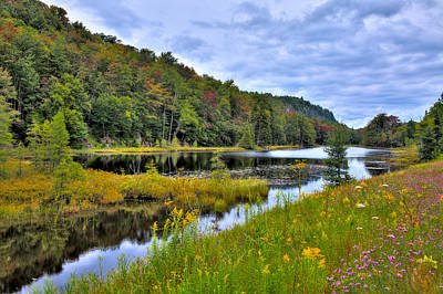 Photograph - Summer Flowers At Bald Mountain Pond by David Patterson