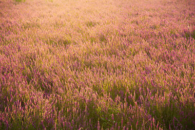 Photograph - Summer Flowers by Kunal Mehra