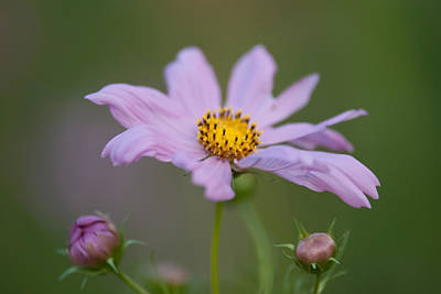 Photograph - Summer Flowers On Meadow by Alex Grichenko