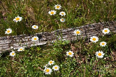 Split Rail Fence Photograph - Summer Flowers On The Blue Ridge Parkway 7653 by Dan Carmichael