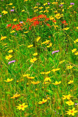 Summer Flowers On The Blue Ridge Parkway I Art Print by Dan Carmichael