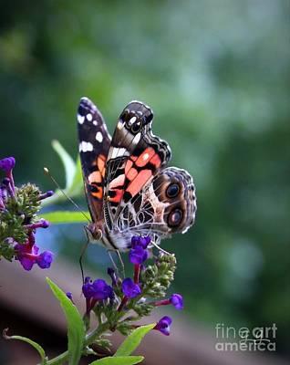 Photograph - Summer Flutter by Geri Glavis