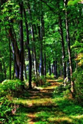 Forest Floor Photograph - Summer Forest In Ohio by Dan Sproul